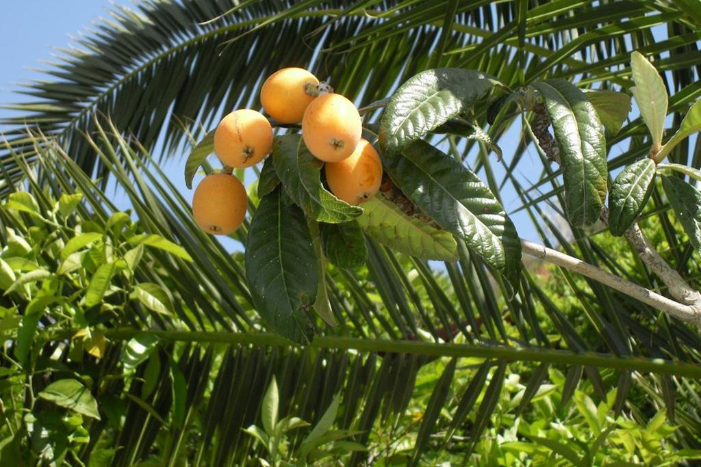 hotel-la-madorla-ischia-maronti-frutti